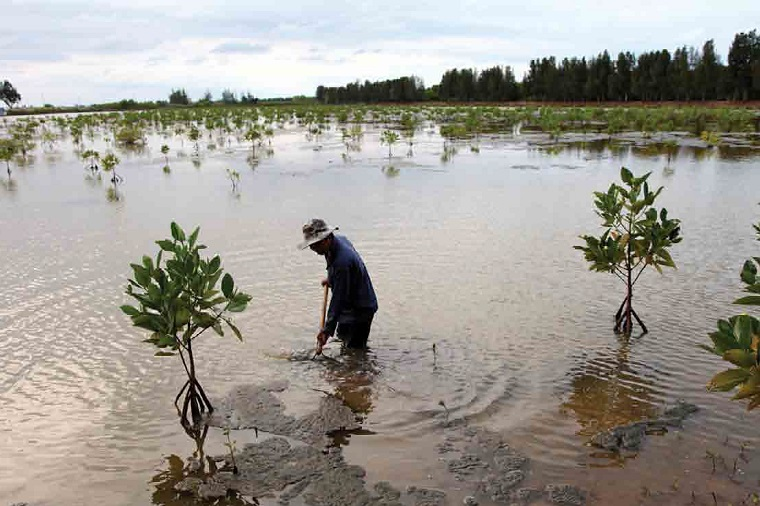 Replanted mangroves dot a shrimp pond in the Mekong Delta. Photo: Greater Mekong Subregion Atlas of the Environment (2nd edition).